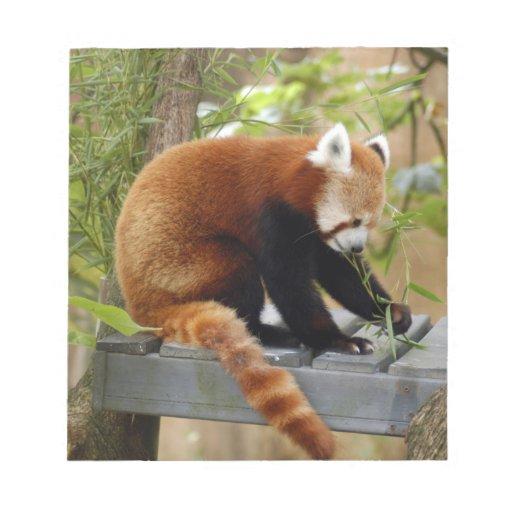 red-panda-039 bloc