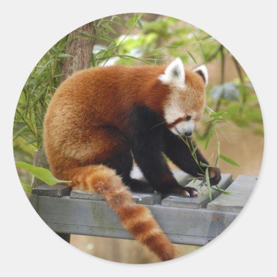 red-panda-039 classic round sticker