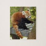 red-panda-040 rompecabeza con fotos