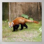red-panda-042 posters