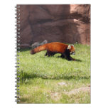 red-panda-044 libretas