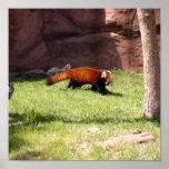 red-panda-044 poster