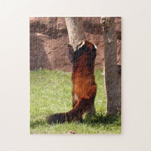 red-panda-045 jigsaw puzzles