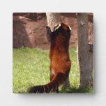 red-panda-045 placa de madera