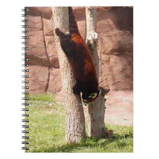 red-panda-047 libretas espirales