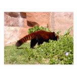 red-panda-048 postal
