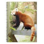 red-panda-051 cuadernos