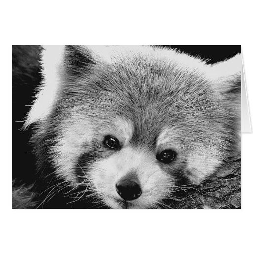 Red Panda #1-Greeting card