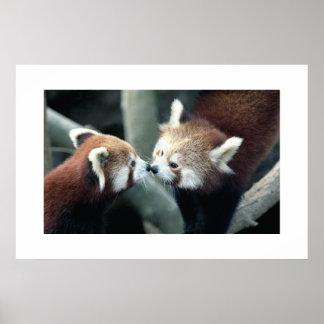 Red Panda #1 Print