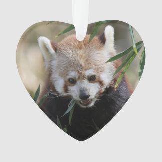 Red_Panda_2015_0311