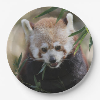 Red_Panda_2015_0311 9 Inch Paper Plate