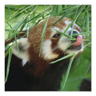 Red_Panda_2015_0707 Magnetic Card