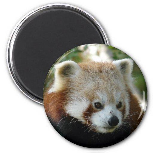 Red Panda 2 Inch Round Magnet