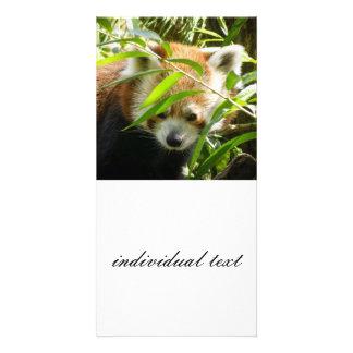 Red Panda 415P2 Photo Card