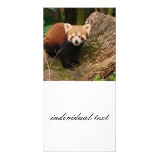 red Panda 415P Photo Card