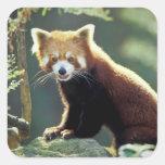 Red Panda Ailurus fulgens) Square Sticker
