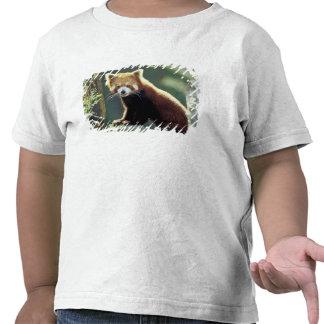 Red Panda Ailurus fulgens) Tee Shirts