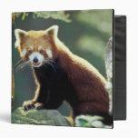 Red Panda Ailurus fulgens) Vinyl Binders