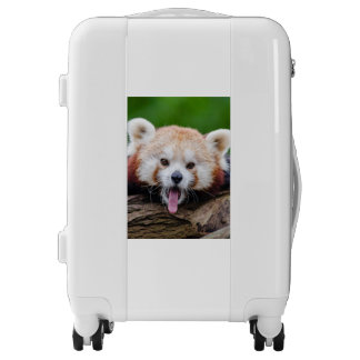 Red Panda Bear Luggage