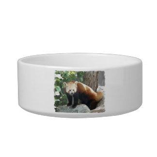 Red Panda Bear Pet Bowl