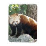 Red Panda Bear Premium Magnet Vinyl Magnet