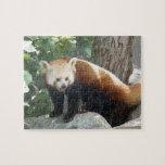 Red Panda Bear Puzzle