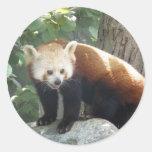 Red Panda Bear Sticker