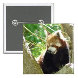 red panda button