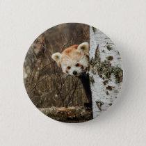 Red Panda Button Badge