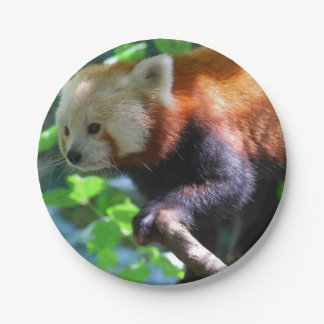 Red Panda Climbing 7 Inch Paper Plate