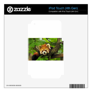 Red Panda Cub Decal For iPod Touch 4G