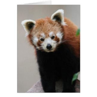 Red Panda Customisable Greetings card