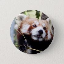 Red Panda face button