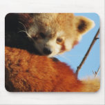 RED PANDA FACE MOUSE PADS