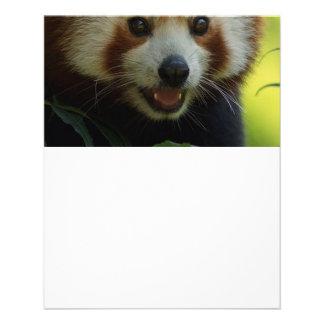 red panda flyer design