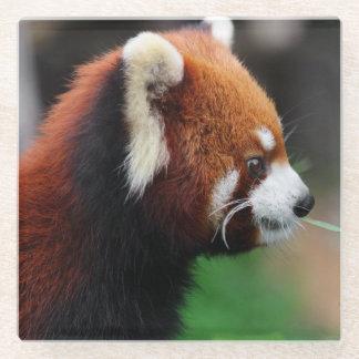Red panda glass coaster