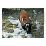 Red Panda Greeting Card