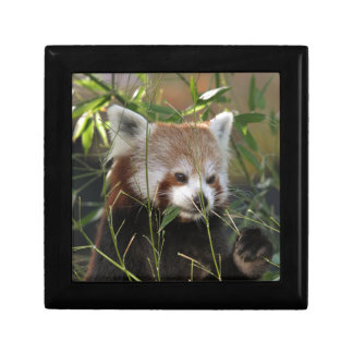 Red Panda in the Grass Gift Box