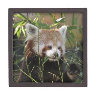 Red Panda in the Grass Keepsake Box