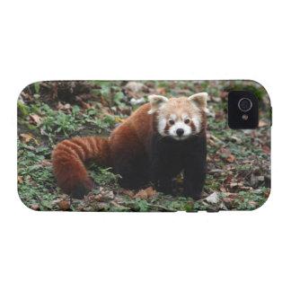 Red Panda iPhone 4/4S Case