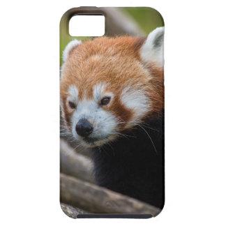 Red Panda iPhone SE/5/5s Case