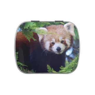 Red Panda Jelly Bean Tin Jelly Belly Tins