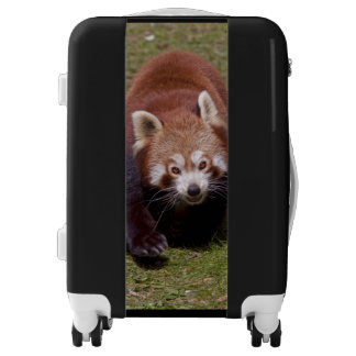 Red Panda Luggage