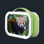 "Red Panda Lunch Box<br><div class=""desc"">Reproduced from an original digital photograph of a cute red panda.</div>"