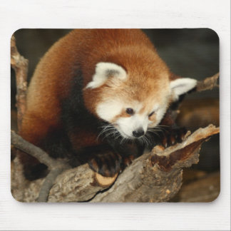 Red Panda Mouse Pad