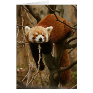 Red Panda Naptime Card