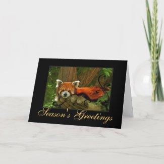 Red Panda Nature Seasons Greetings Holiday Card card
