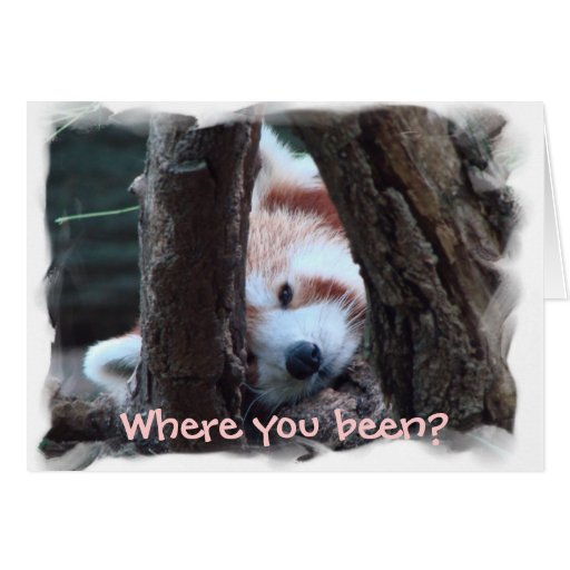 """Red Panda notecard: """"Where you been? I miss you!"""" Card"""