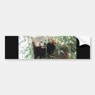 Red Panda Open Mouth Bumper Sticker