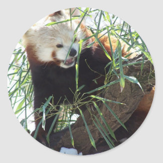 Red Panda Open Mouth Classic Round Sticker